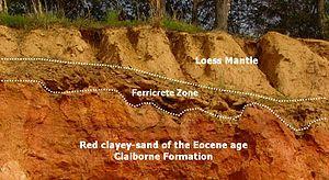 Ferricrete - Ferricrete layer in a Gulf Coastal Plain outcrop.