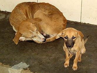 International Animal Rescue - Image: Dog rescue shelter