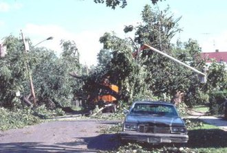 1989 Northeastern United States tornado outbreak - Damage to trees in Hamden, Connecticut