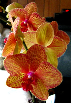 Beautiful orchids.