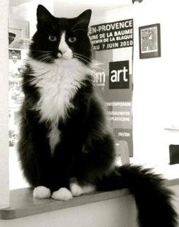 Henri, le Chat Noir web series featuring a cat