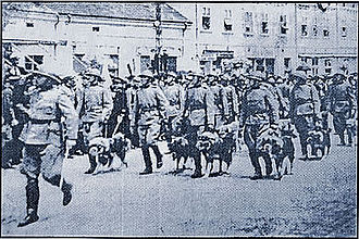 Šarplaninac - Šarplaninac service dogs of the Royal Yugoslav Army