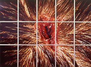 Young British Artists - Mat Collishaw Bullet Hole which was on display in the Freeze exhibition.