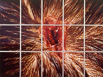 Young British Artists - Mat Collishaw's Bullet Hole, which was on display in the Freeze exhibition