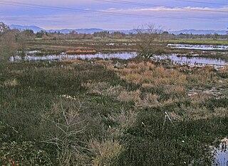 Laguna de Santa Rosa wetland in Sonoma County, California, USA
