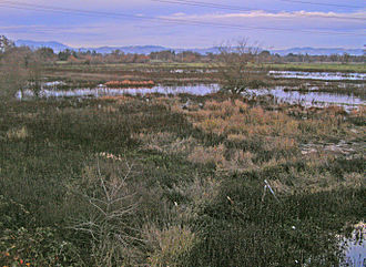 Laguna de Santa Rosa - Looking northeast across the Laguna de Santa Rosa with the Mayacamas Mountains in the background