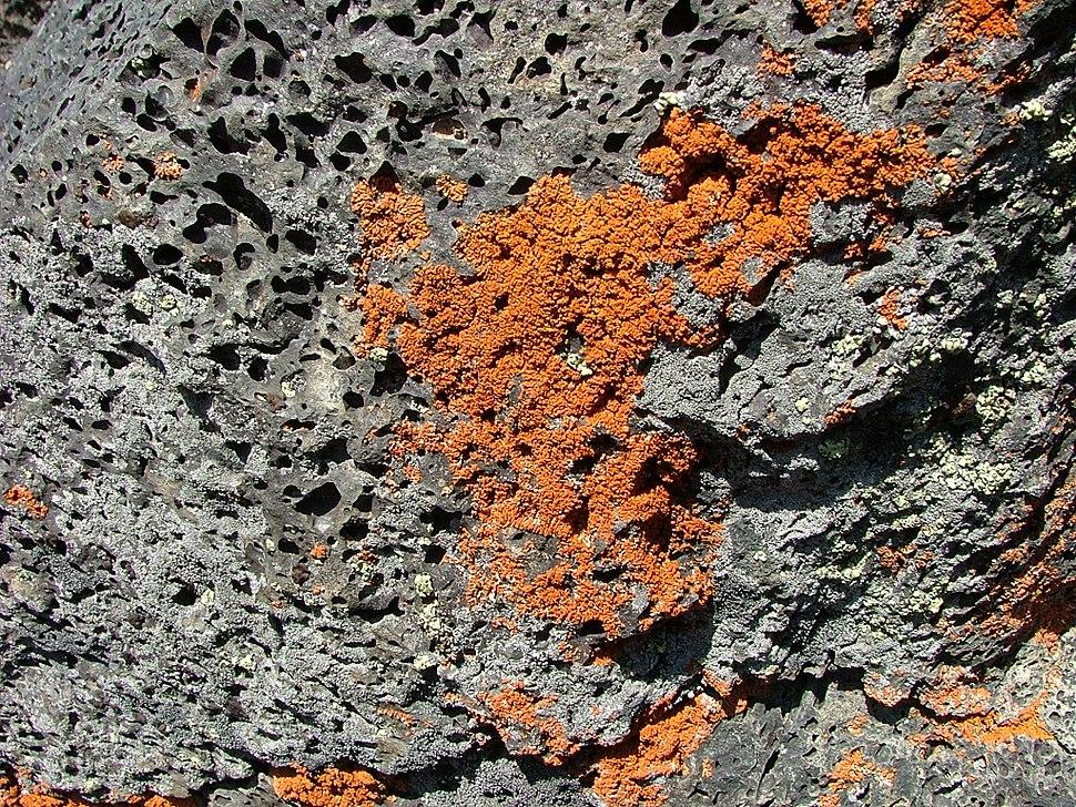Reddish-colored lichen on volcanic rock