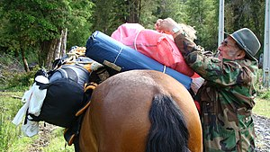 Arriero - A muleteer loading a pack horse in southern Chile