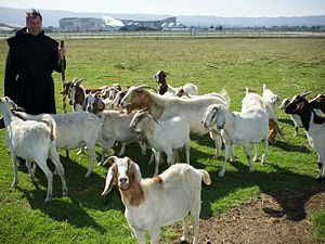 Pete Worden - Pete Worden was sighted herding goats near the airfield at NASA Ames around the time of Yuri's Night 2007