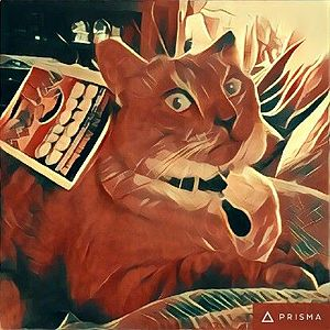 An image of a cat rendered via the app.