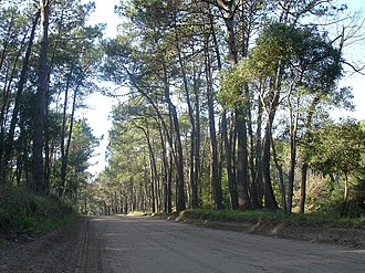 Cariló - Image: Carilo Streets