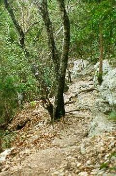 Vista Loop Trial in Friedrich Wilderness Park. San Antonio, TX.jpg