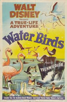 Water Birds FilmPoster.jpeg