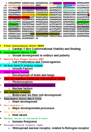 Coiled-coil domain containing protein 120 - The nucleotide sequence of the 601 bp promoter for CCDC120 is shown with key transcription factors that are well-identified by algorithms labeled. (http://www.genomatix.de/)