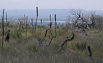 Jervis Bay Territory - Native vegetation