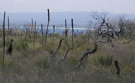JBT vegetation