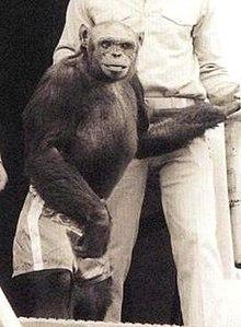 Oliver the chimpanzee - Wikipedia