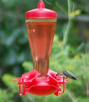 Hummingbirds will either hover or perch to feed; red feeders are preferred, but colored liquid is not necessary and may be hazardous to their health.