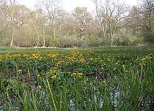 Damp area at Castor Hanglands NNR, England