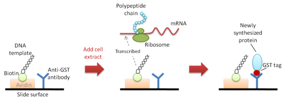 Cell Free Protein Array Wikipedia