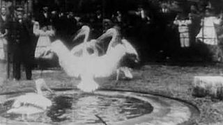 <i>Pelicans, London Zoological Gardens</i> 1896 film by Alexandre Promio