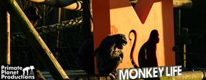 Monkey Life (TV series) - Image: Monkey Life Image