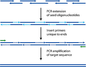 Polymerase cycling assembly - Image: PCA polymerase cycling assembly