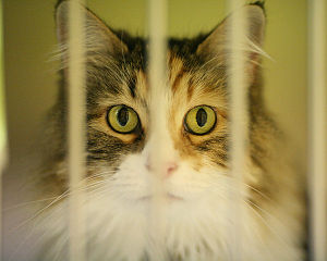 Emma, at the Seattle Animal Shelter
