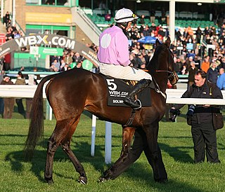 Solwhit French-bred Thoroughbred racehorse