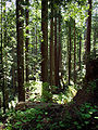 Arcata Community Forest Looking Down.jpg