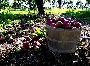 Apple Bushel by Zelphics