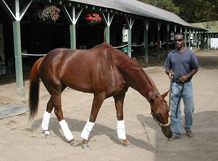 Funny Cide Wikiwand