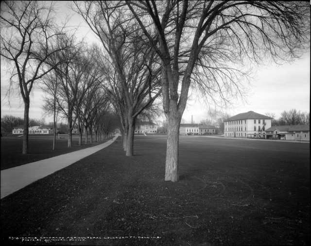 Colorado Agricultural College Campus, 1920