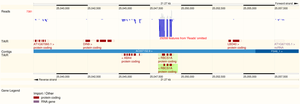 """Ensembl Genomes - Visualisation of a custom track labelled """"Reads"""" in Ensembl Genomes"""