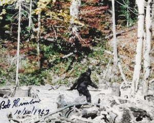 Bigfoot - Image: Patterson–Gimlin film frame 352