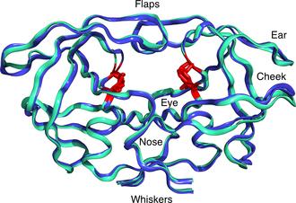 HIV-1 protease - Image: Molecular bulldog face