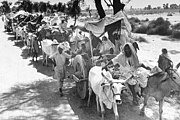 Rural Sikhs in a long oxcart train headed towards India. 1947. Margaret Bourke-White.