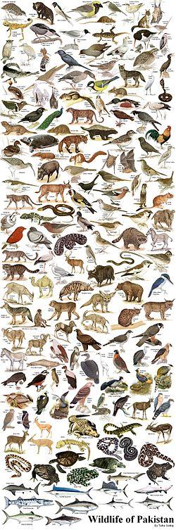 http://upload.wikimedia.org/wikipedia/en/thumb/9/9a/WildlifeofPakistan.JPG/250px-WildlifeofPakistan.JPG