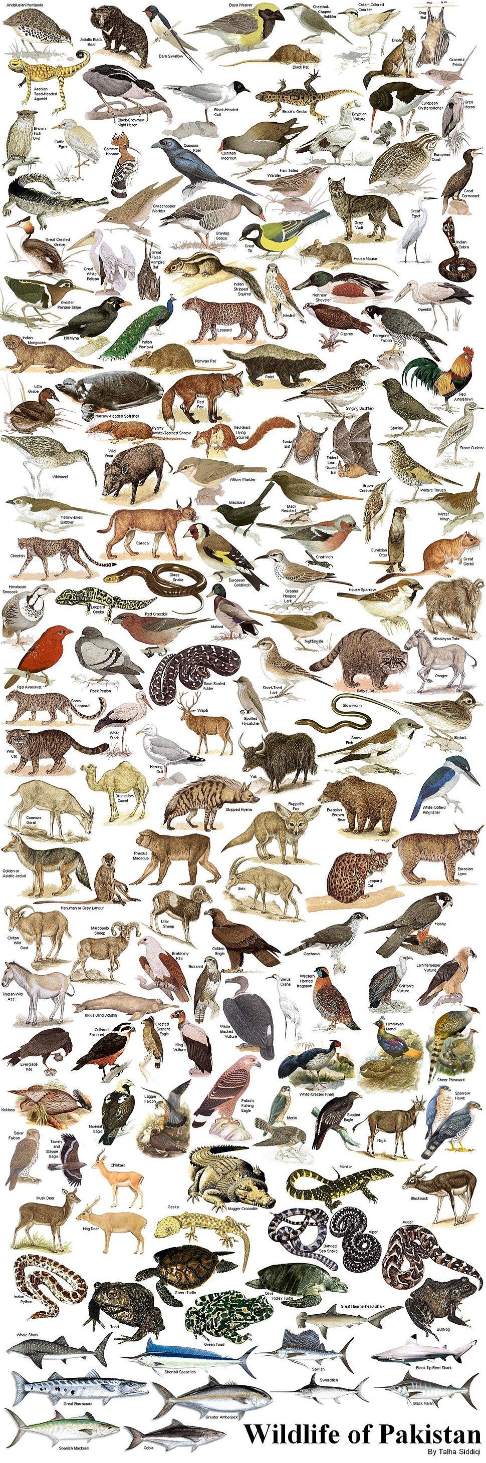 WildlifeofPakistan.JPG