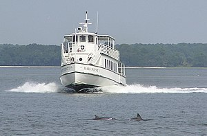 Daufuskie Island - Dolphins gliding in front of the Haig Point private ferry