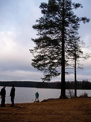 Komarovo, Saint Petersburg - Lake Shchuchye in Komarovo