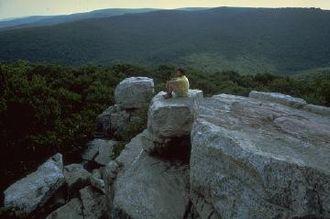 Catoctin Mountain - Catoctin Mountain vista (from Chimney Rock)
