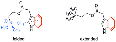 Cation–π interaction in indole-3-acetic acid choline ester compared to neutral analog