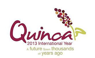 Quinoa - Logo of the International Year of Quinoa, 2013