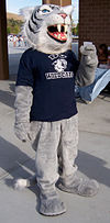"A costumed mascot wildcat. The costume is covered in gray and fuzzy. The mascot has a navy blue shirt with the text ""DV Wildcats"" and the school's wildcat logo."