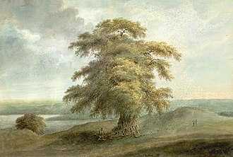 Ceded and Conquered Provinces - Image: Sita Ram 1814Allahabad Tamarind Tree