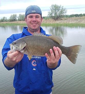 Bass fishing - Smallmouth bass caught on the Missouri River in Niobrara, Nebraska, U.S.