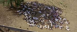 Zanzibar Revolution - The bodies of Arabs killed in the post-revolution violence as photographed by the Africa Addio film crew