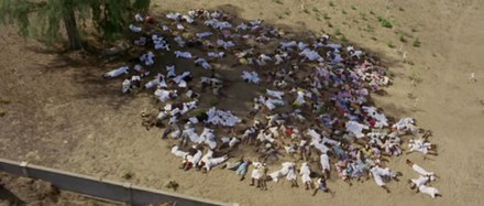 The bodies of Arabs killed in the post-revolution violence as photographed by the Africa Addio film crew