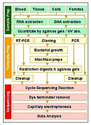 Resequencing steps. Sample prep: Extraction of nucleic acid. Template prep: Amplification and preparation of a small region of the target region. Sequencing steps. (click to expand)